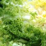 lattuga riccia 150x150 Insalata di Zucchine e Salsa alla Menta