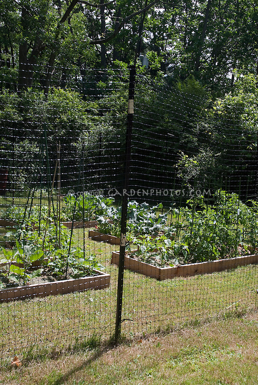 Raised Vegetable Garden Fence