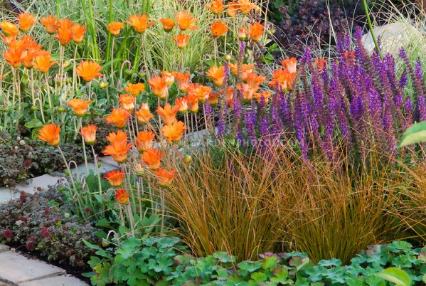 purple and orange flower garden Orange and purple hot and cool garden color theme | Plant