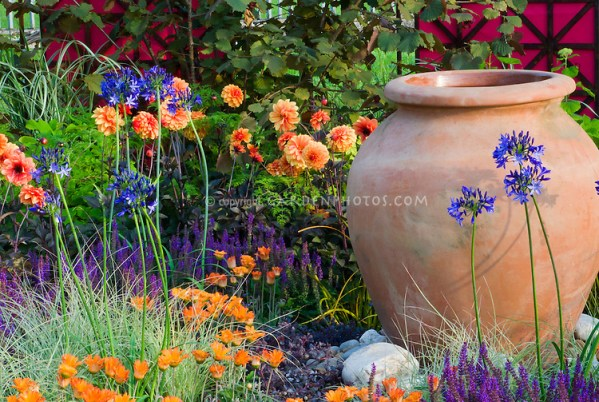 purple and orange flower garden Orange and purple garden color theme | Plant & Flower