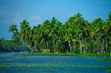 Backwater Kerala