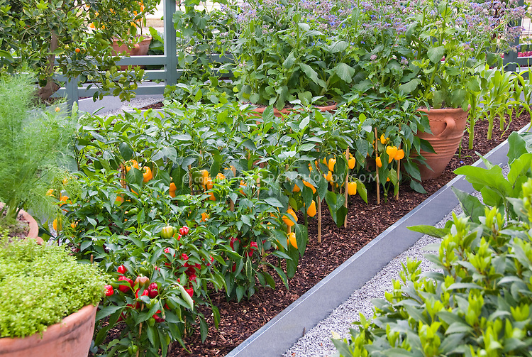 How Make Raised Vegetable Garden