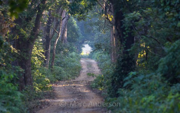 Road through Sal Forest in Bardia National Park, Nepal ...