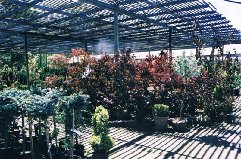 Indoor Plants Halifax