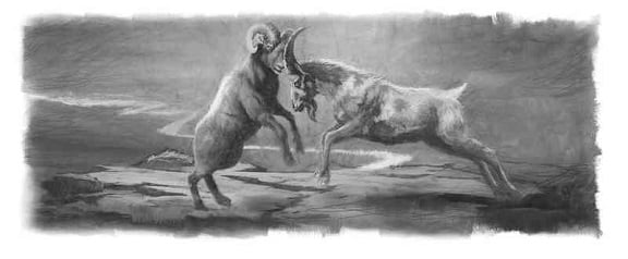 Ram and Goat