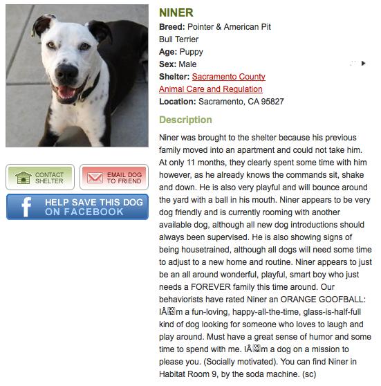 Reno's Shelter Ad