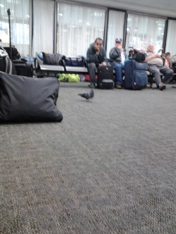 A pigeon in the waiting area of Union Station.
