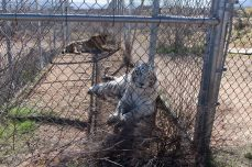 Out of Africa Wildlife Park, Camp Verde, Arizona