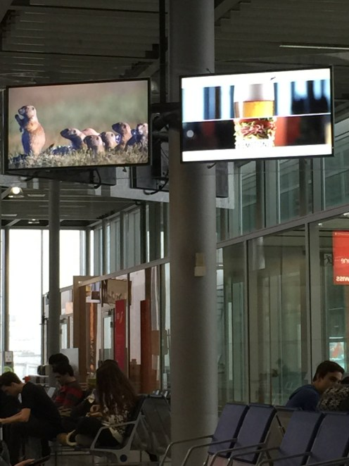 HA! On the way back to Copenhagen, the airport TVs were showing ads for South Dakota! Hahahaha