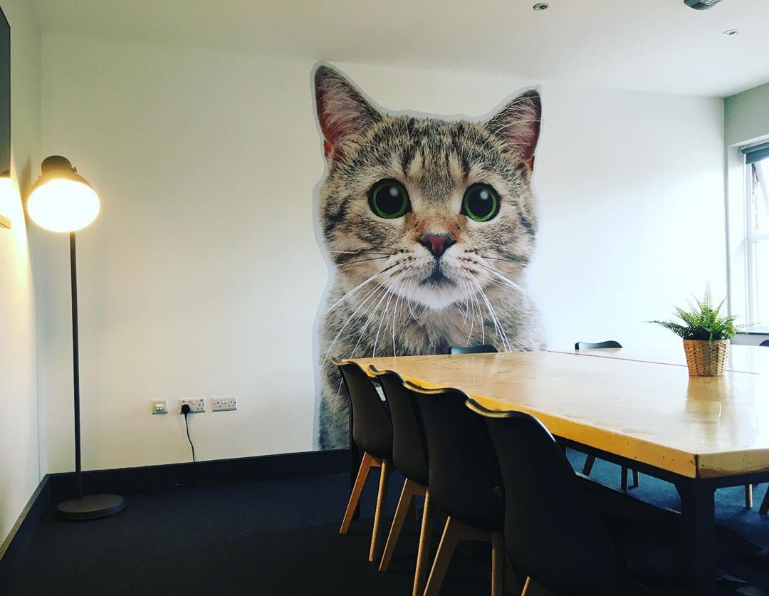 2.5 meter cat, printed and installed by Sign Services