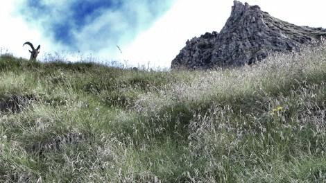 Sentier des Chamois: Tim wurde fündig und wir werden beobachtet
