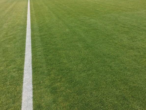 グラウンドの芝
