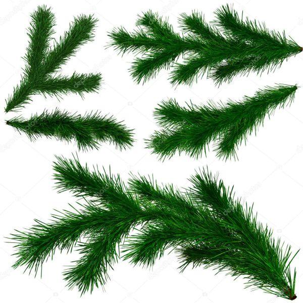 Еловые ветки. Набор еловые ветки елки — Стоковое фото ...