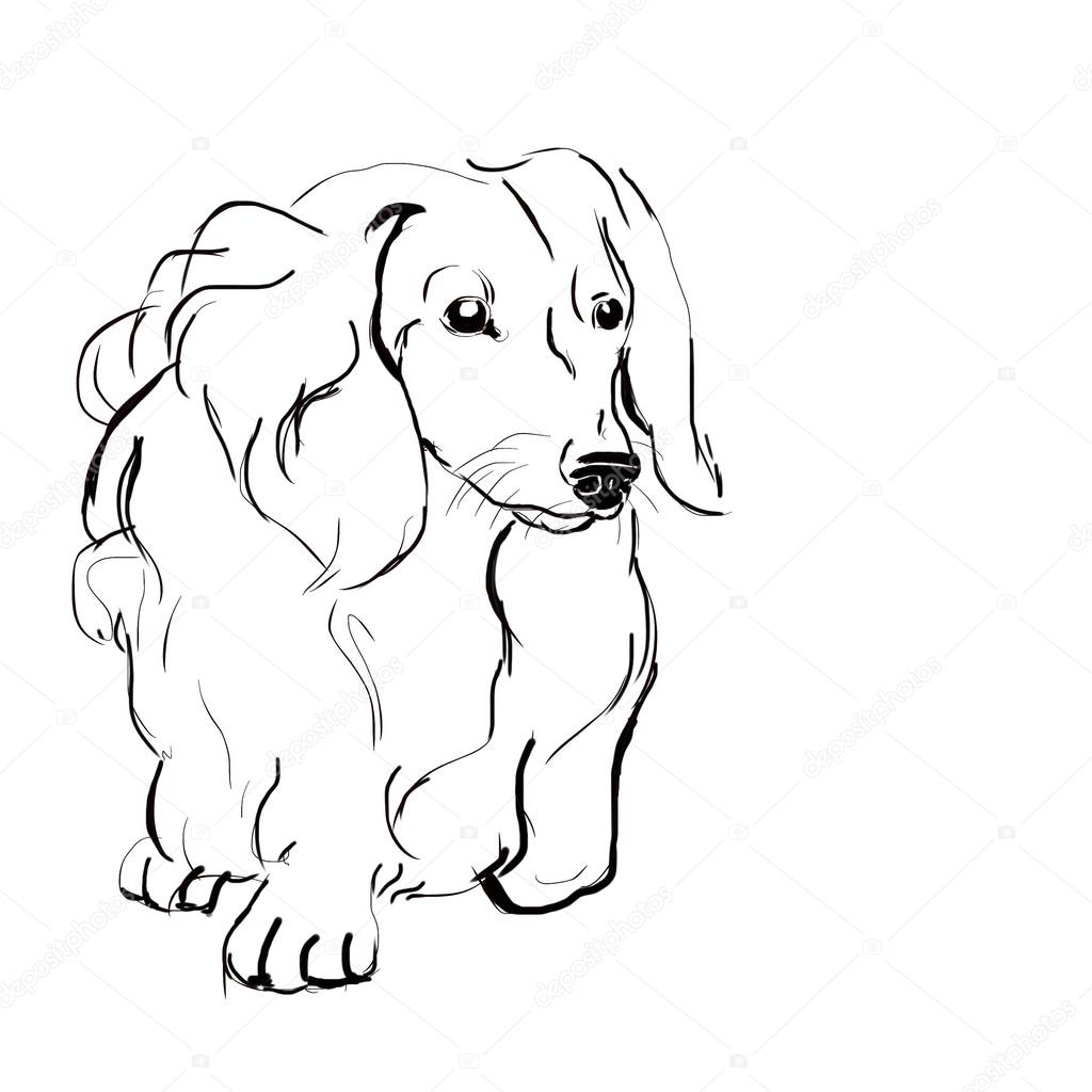 Sketch Dog Breed Long Haired Dachshund