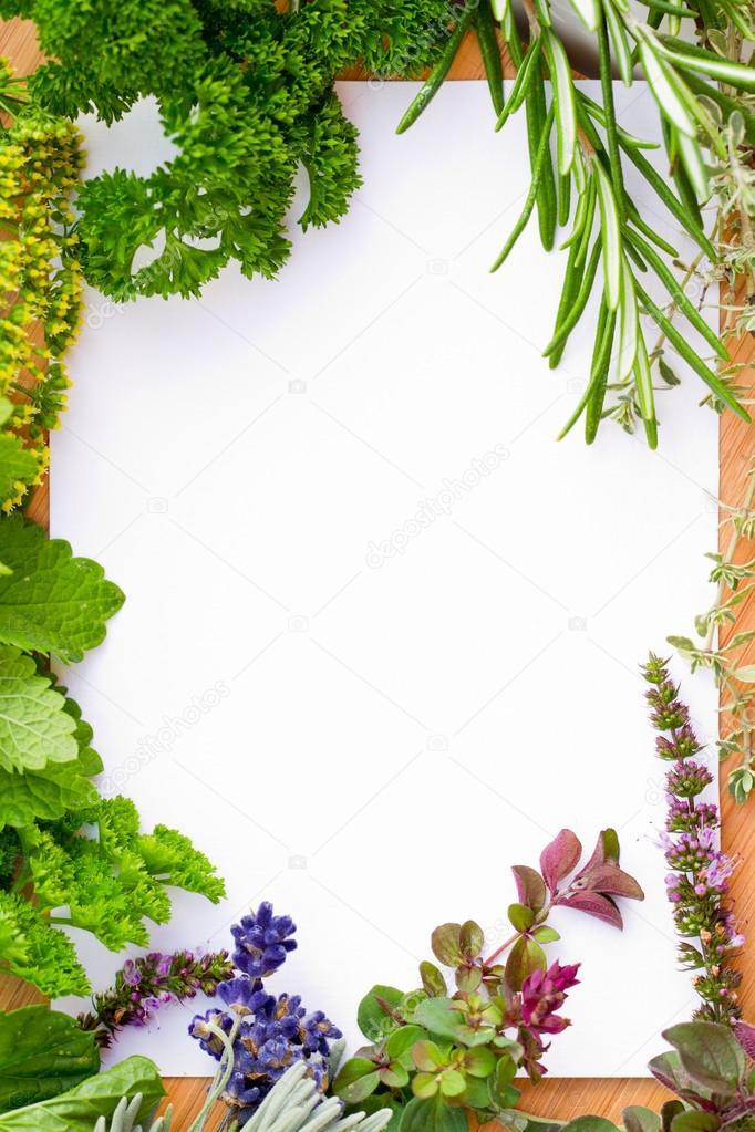 Herbs Frame Over White Background Stock Photo Gorilla