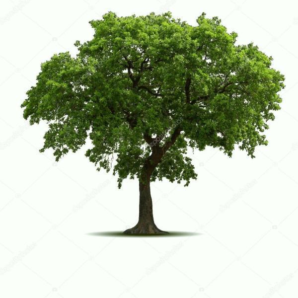 Дерево высокое качество — Векторное изображение ...