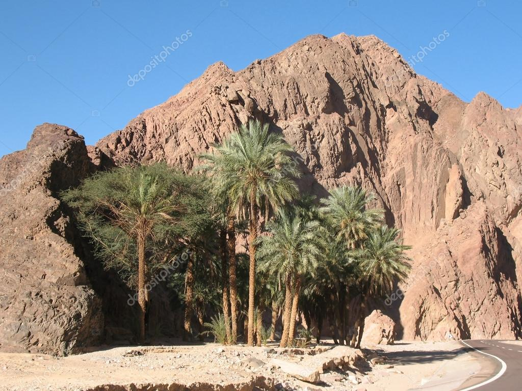 Palm Trees On A Background Of Mountains In Egypt