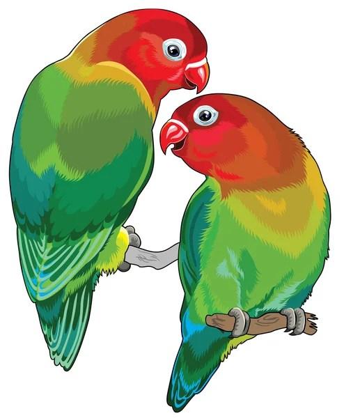 Áˆ Parrot Love Birds Stock Images Royalty Free Lovebird Vectors Download On Depositphotos