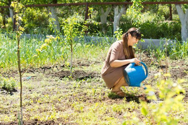 Красивая женщина сидит и поливает растения — Стоковое фото ...