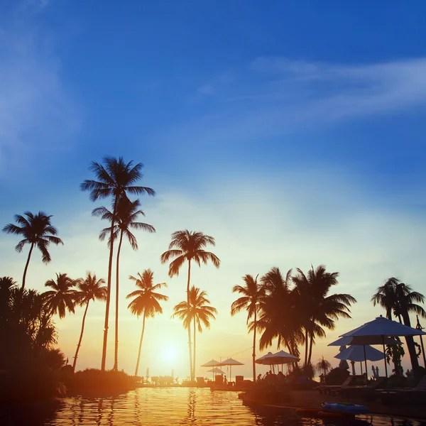 Силуети пальмами на заході сонця — Стокове фото ...