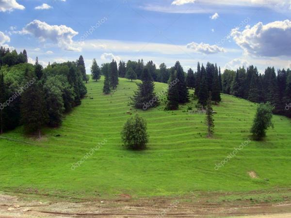 Холм с старых елей, благоприятные для экологического ...