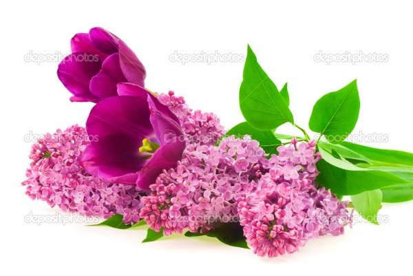 Цветы сирени и тюльпанов — Стоковое фото © ulkan #46404725