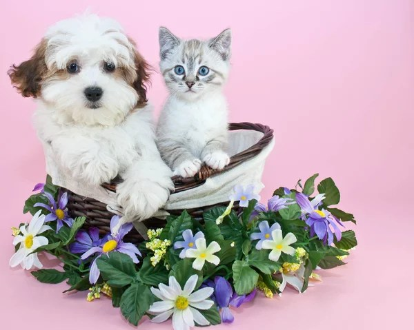 ᐈ Котята с цветами фото, фотографии котенок с цветами ...