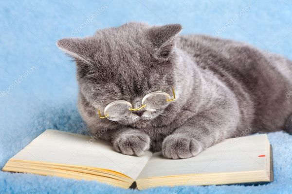 Бизнес Кот чтения ноутбук — Стоковое фото © vvvita #44805733