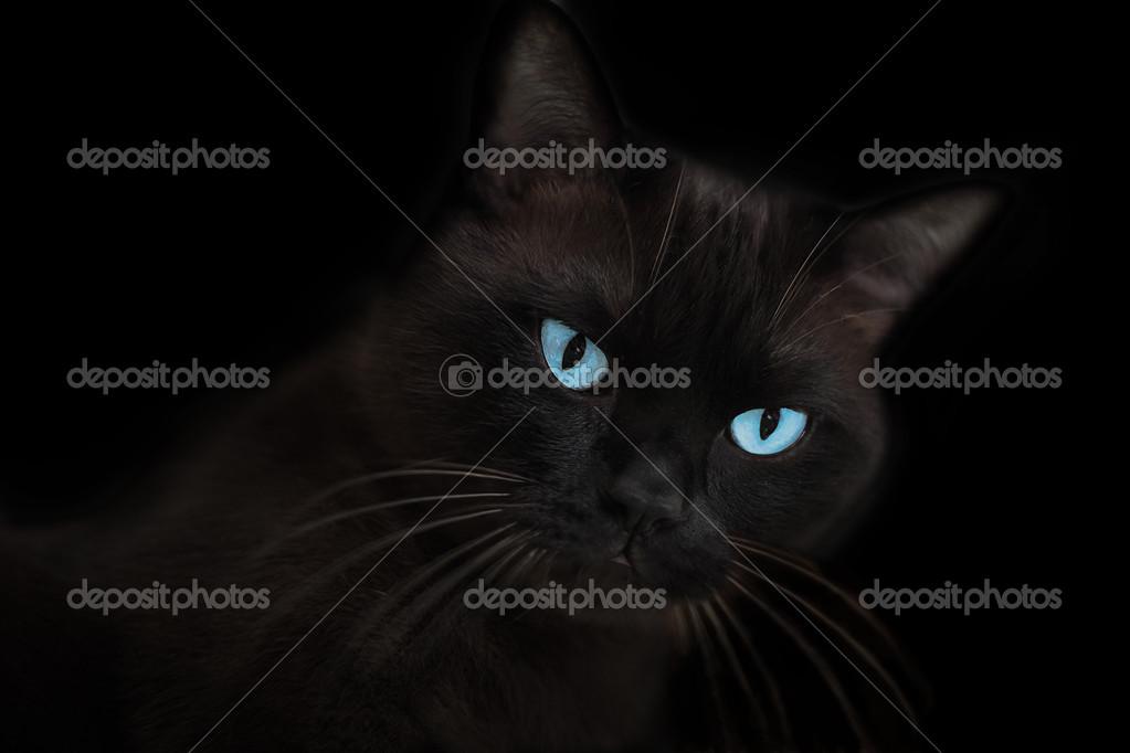 Braun Schwarze Katze Mit Blauen Augen Stockfoto