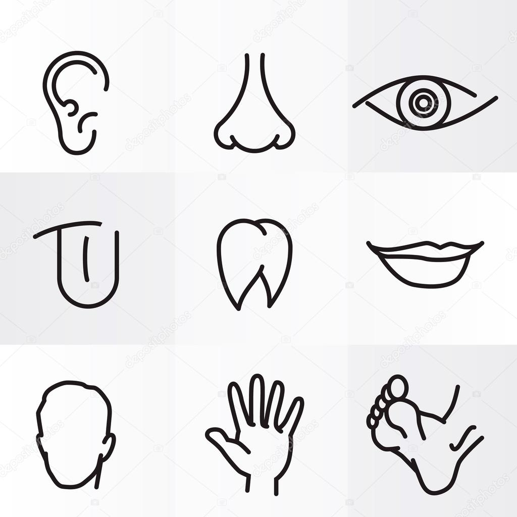 Set Of Vector Icons Human Body Parts