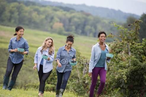 Quattro donne che camminano tra le fila di cespugli di more ...