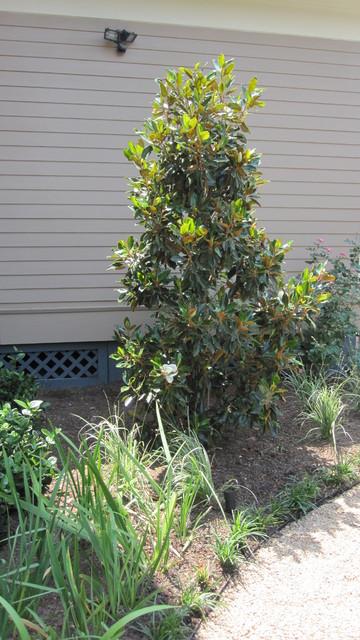 Backyard bird sanctuary - Traditional - Landscape ... on Birds Backyard Landscapes id=37185