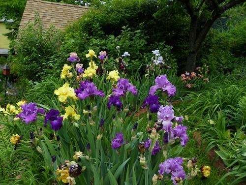 Iris Gardens Zest Homes