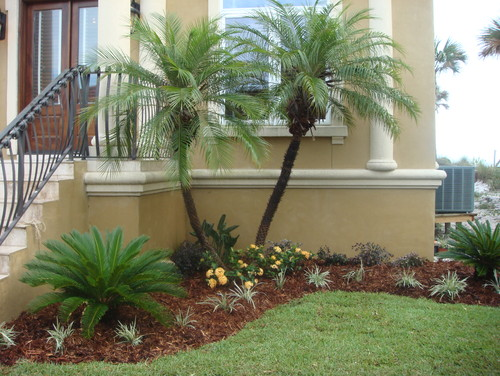 """what is the small palm like """"bush"""" in front of the trees ... on Palm Tree Backyard Ideas id=54816"""