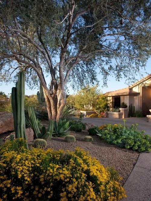 Backyard Desert Landscaping | Houzz on Desert Landscape Ideas For Backyards id=47241