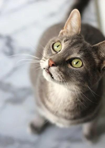 Pet of the Week: James