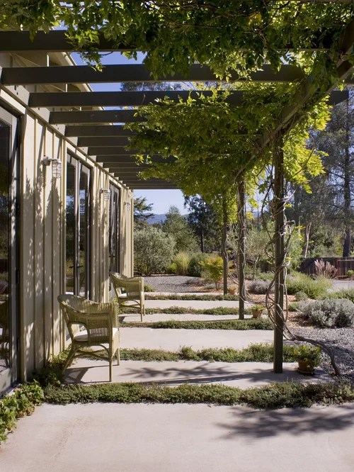 Vine Covered Pergola Houzz