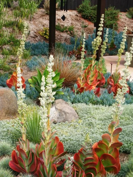modern succulent garden ideas Best Succulent Landscape Design Ideas & Remodel Pictures