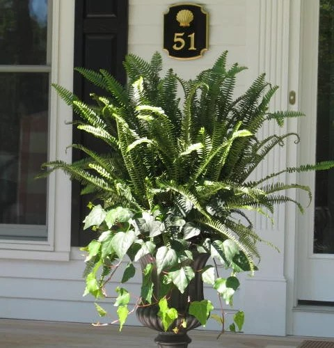 Fern Planter Ideas Pictures Remodel And Decor