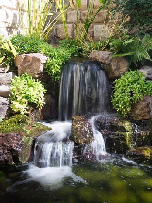 Koi Pond Installation Cost