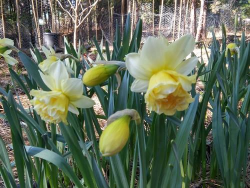 OT Whats Blooming In MY Garden