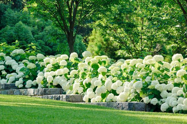 Katia Goffin Gardens