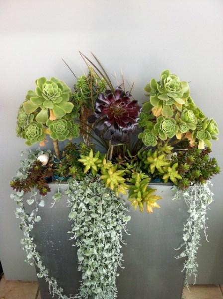 modern succulent garden ideas Modern Succulent Garden - Contemporary - Landscape
