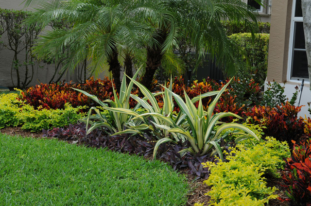 Tropical Landscape Color - Tropical - Landscape - Miami ... on Tropical Backyard Ideas  id=17552