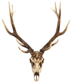 Deer Skull Wall Decor Southwestern Wall Sculptures
