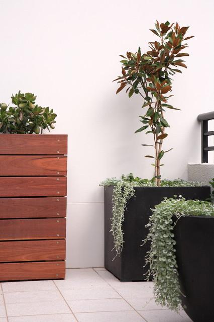 Hard To Kill Balcony Plants Houzz Au