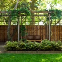 How to Use Ferns in Your Garden Landscape