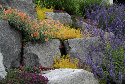 Piante per giardino roccioso giardinaggio irregolare - Costruire giardino roccioso ...