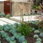 Succulent Landscape Houzz