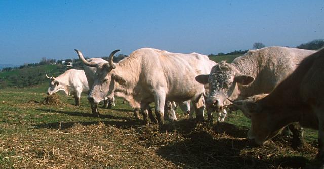 Diossina nel latte dei bovini che pascolano a Massafra, a 20 km da Taranto